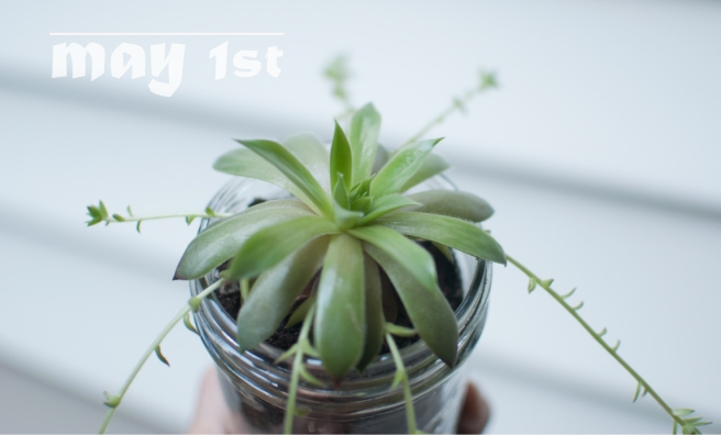 SUCCULENT_MAY